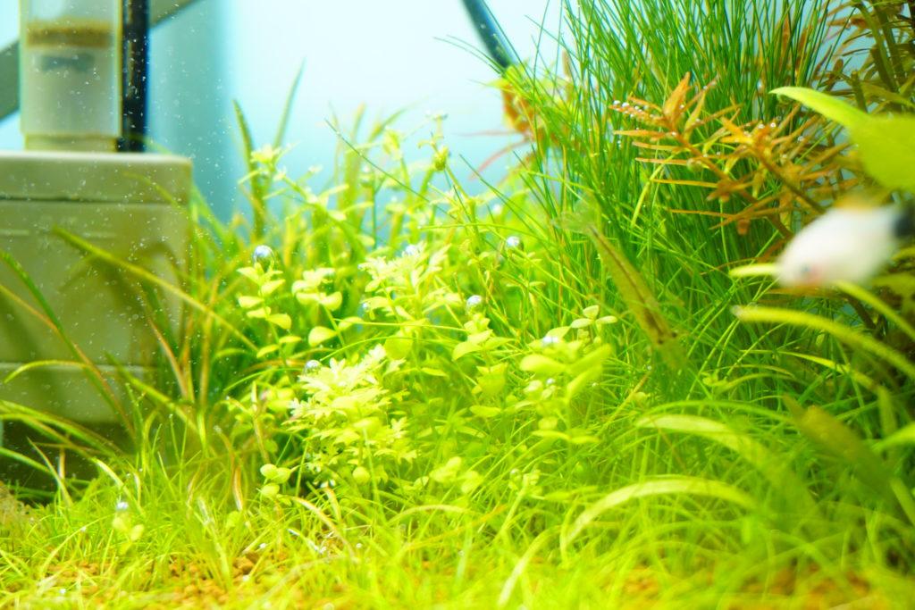 水草タップリ