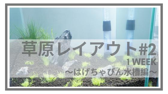草原レイアウト2